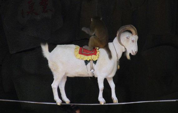 动物表演杂技图片